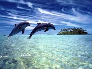 Медитация с дельфинами
