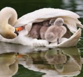 Обретение родительской любви